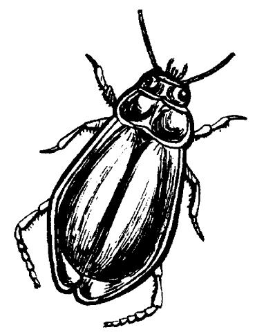 исследовательская работа `опыт содержания жука-плавунца в домашних условиях`