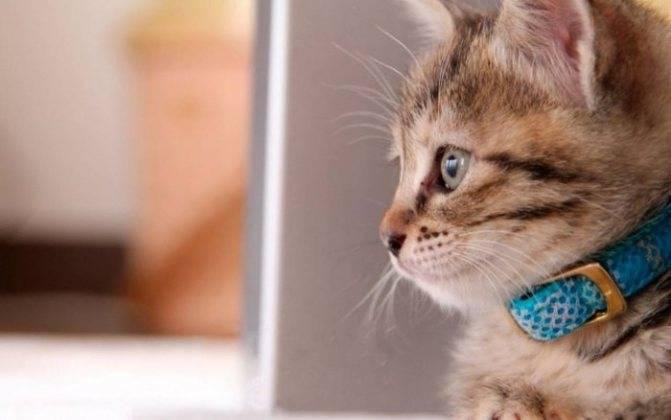 Дегтярное мыло от блох у кошек и собак: как применять?