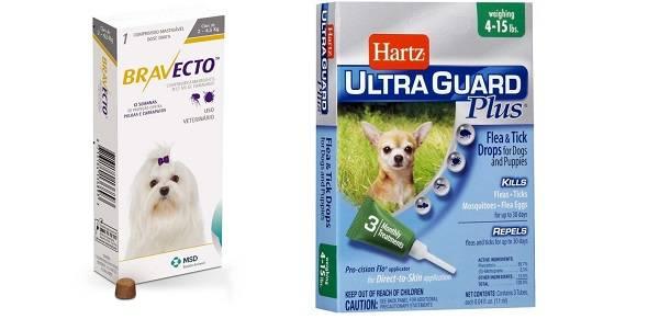 Защита собаки от клещей