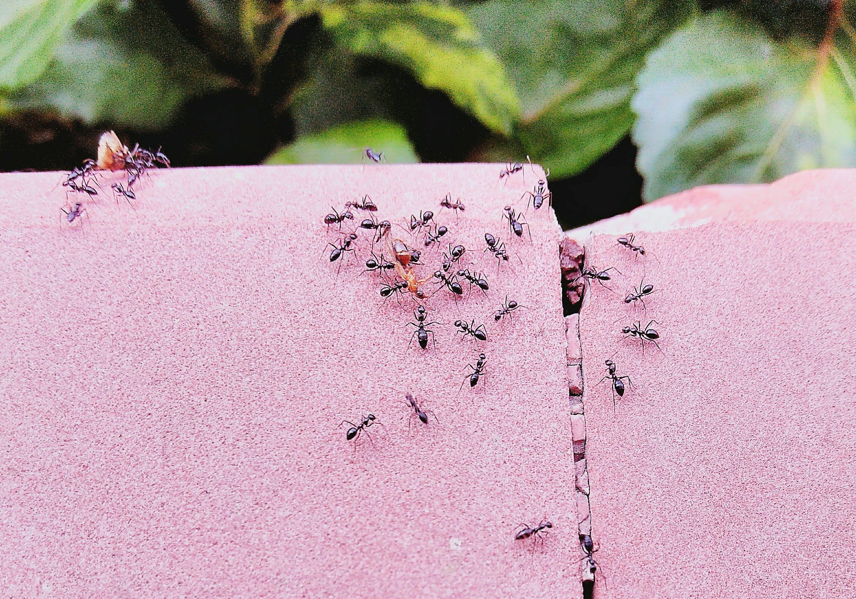 Эффективные средства от домашних муравьев в квартире