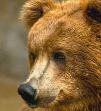Зверек карбыш: фото, описание, среда обитания, вред и методы борьбы