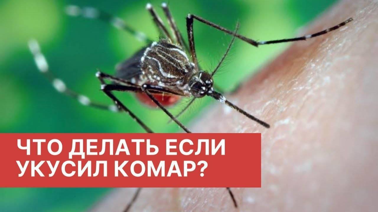 Что происходит после укуса комара
