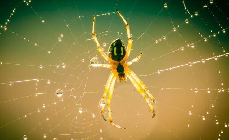 Паук это кто насекомое или животное