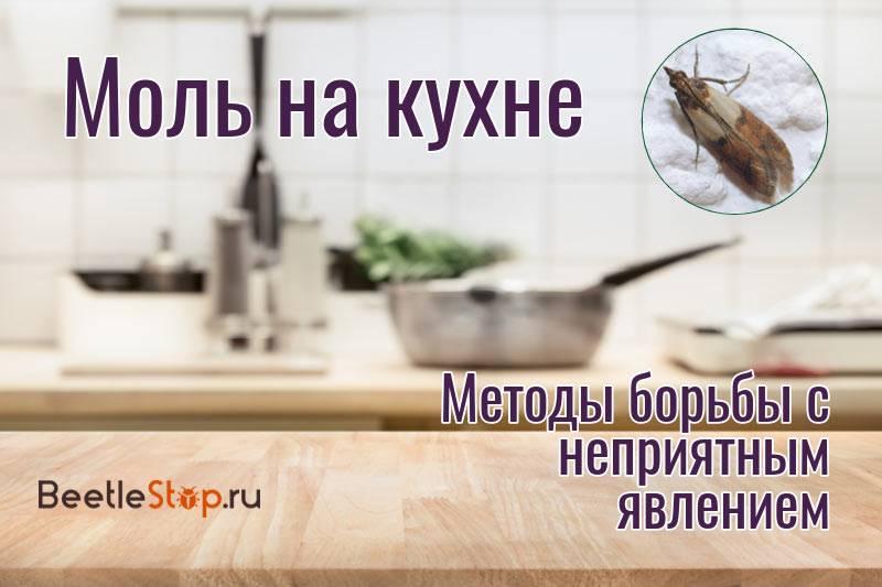 Как избавиться от пищевой моли на кухне дома – народные средства