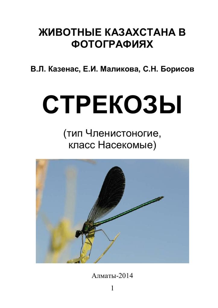 Стрекозы: фото и описание