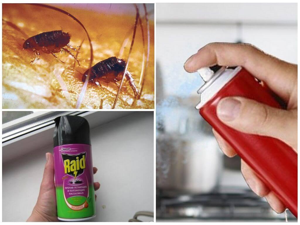 Как быстро и эффективно избавится от блох в квартире и доме