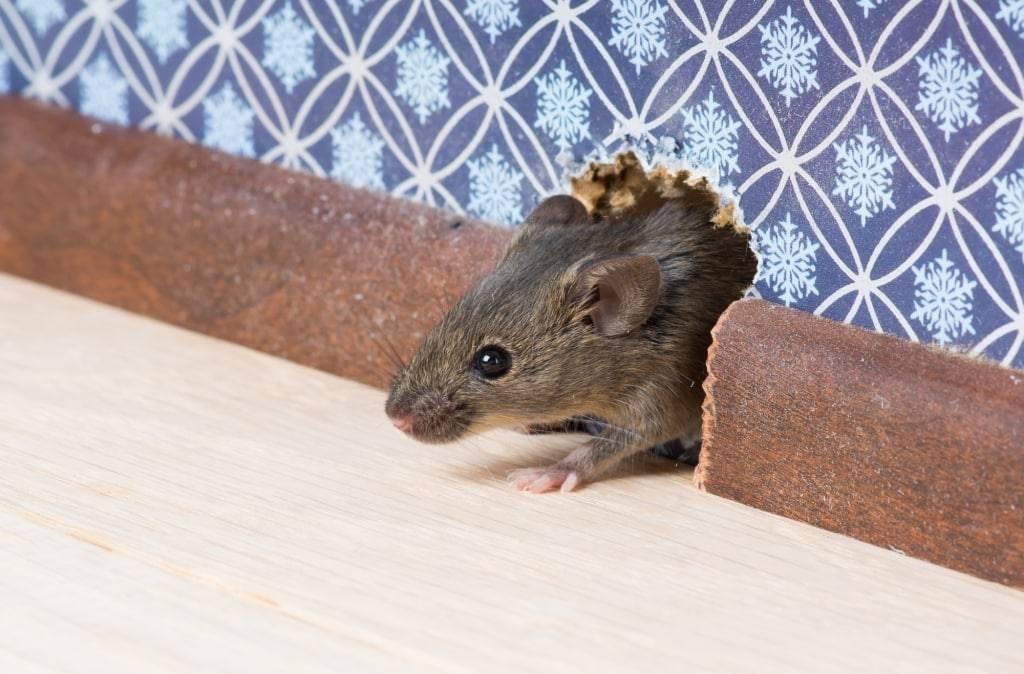 Каких запахов боится моль в домашних условиях?