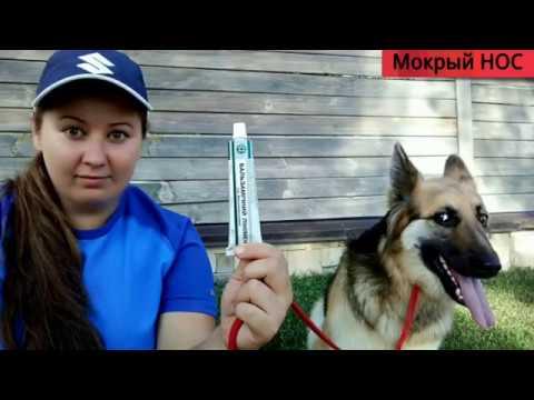 Отит у собак: определяем симптомы и лечим в домашних условиях