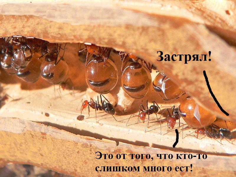 В чем заключается боязнь муравьев – создадим вредителям неприемлемые условия для проживания в квартире