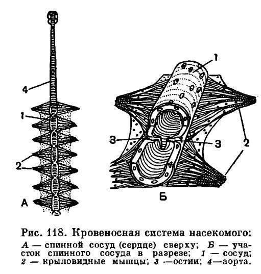 Минеры. препараты от минеров