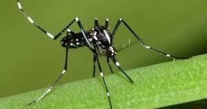 Почему комары кусают не всех