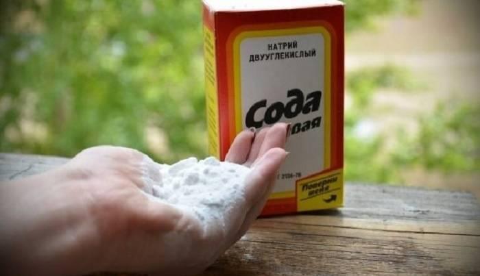 Сода – лучшее средство для борьбы с мучнистой росой