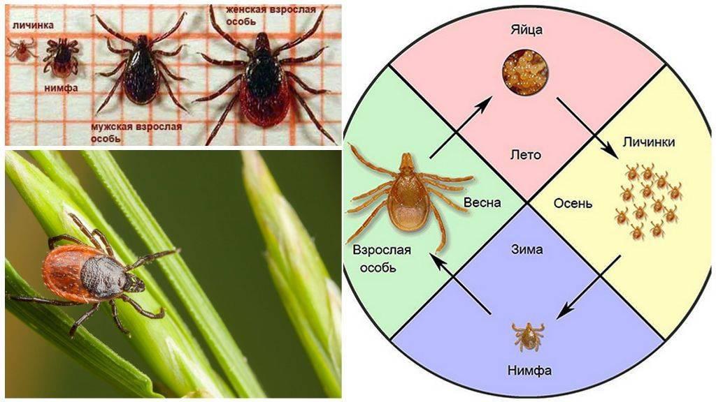 Размножение и развитие насекомых: основные типы и стадии