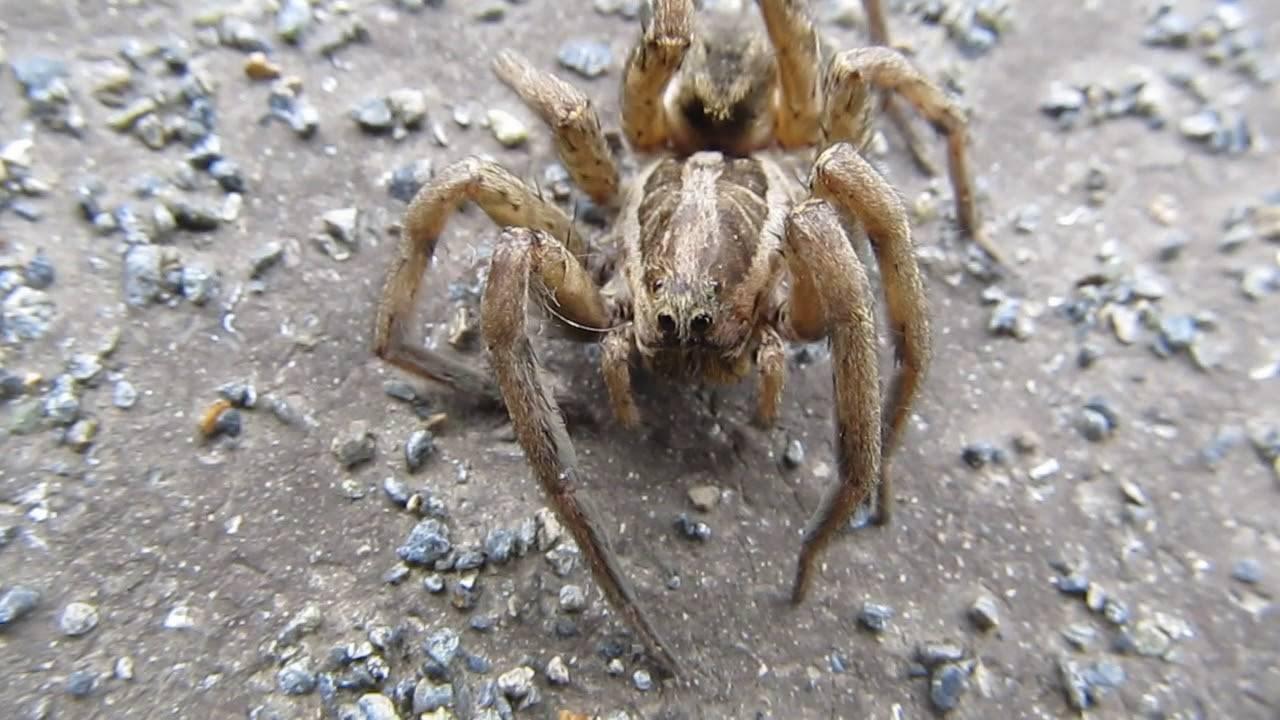 Виды пауков с фото и названиями