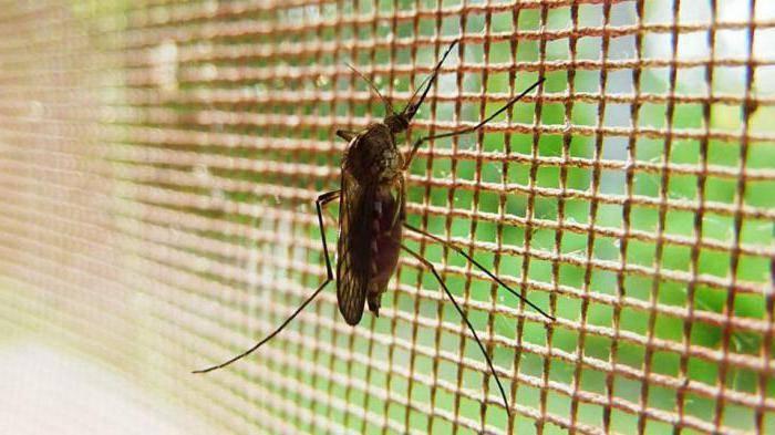 До какого этажа может добраться комар?