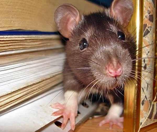 Мыши и пенопласт