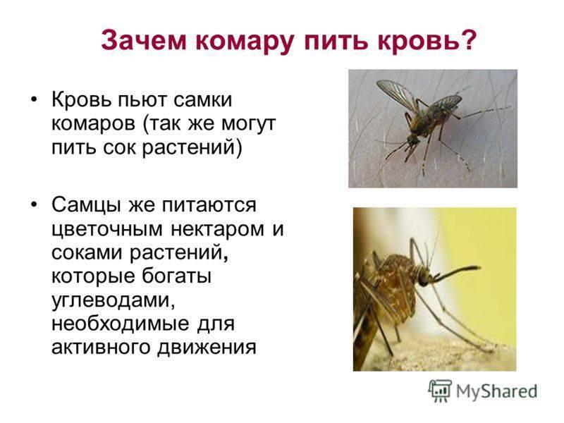 Зачем комары пьют кровь?