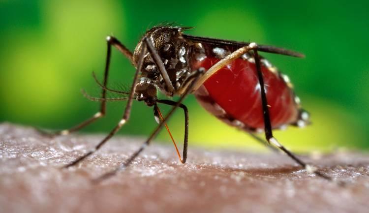 Чем питается комар? обзор предпочтений насекомого в зависимости от пола и стадии развития. комар - описание, фото и видео - мир животных
