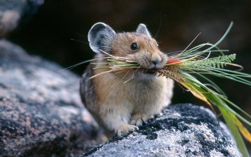Отпугиватель крыс и мышей — или лучше кот?