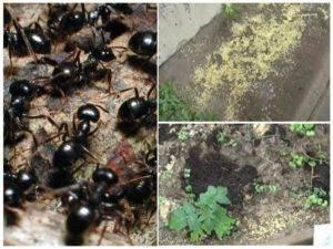 Как навсегда избавиться от муравьев на участке: обзор средств и методов борьбы