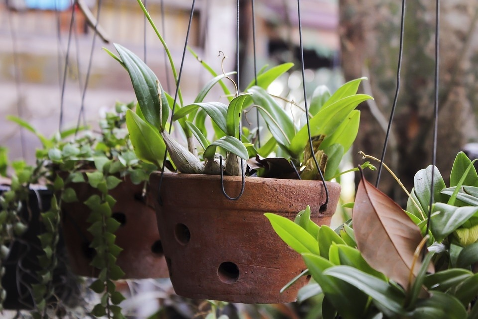 Плесень в горшках комнатных растений: виды, причины и способы борьбы