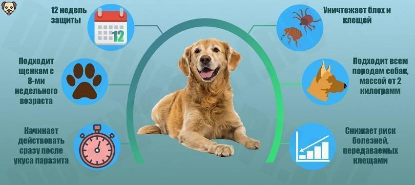 Бравекто для собак: инструкция и рекомендации по применению