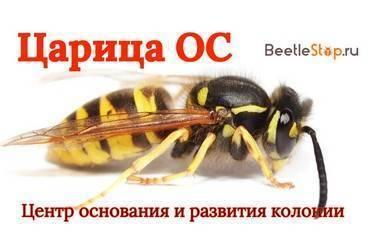"""Рубрика """"инсектициды"""""""