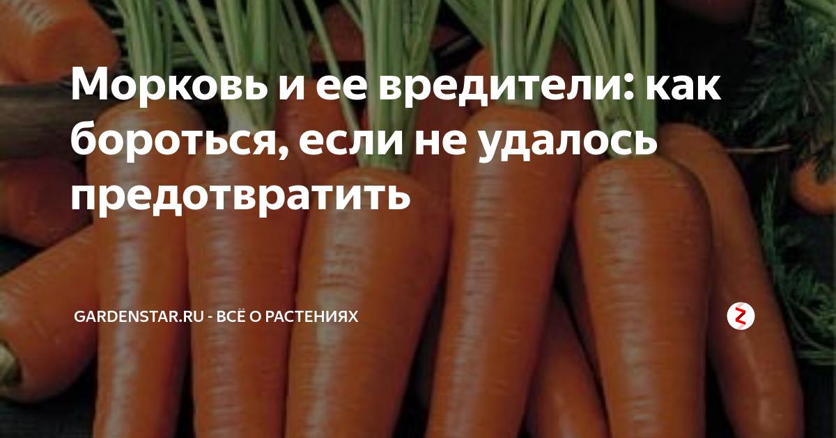 Чем обработать морковь от тли