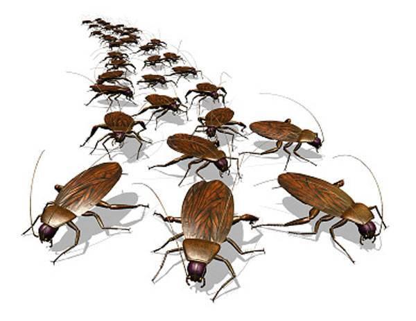 Чего боятся тараканы в квартире и как от них избавиться