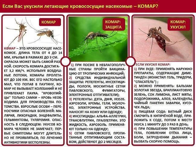 Когда появились комары на земле