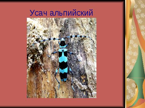 Самшит в огневке: можно ли предотвратить катастрофу в реликтовых кавказских лесах