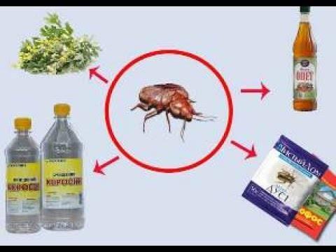 Клопы в доме и в квартире: описание, фото, видео и полный обзор современных инсектицидов. как бороться с клопами в домашних условиях: самые эффективные средства