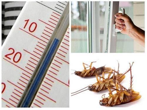 Сколько живут тараканы домашние — в различных условиях и методы борьбы с ними