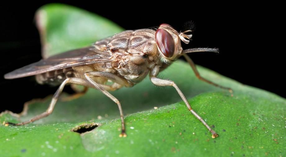 Сколько весит обыкновенная комнатная муха