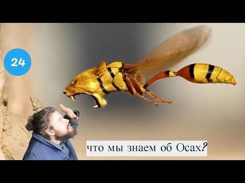 Как зимуют осы. где зимуют осы, спят ли насекомые в холодный период года? видео: как готовятся к зиме пчёлы