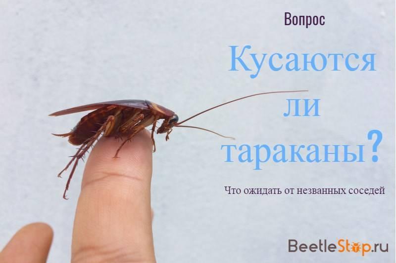 Атака насекомых: кусаются ли тараканы?