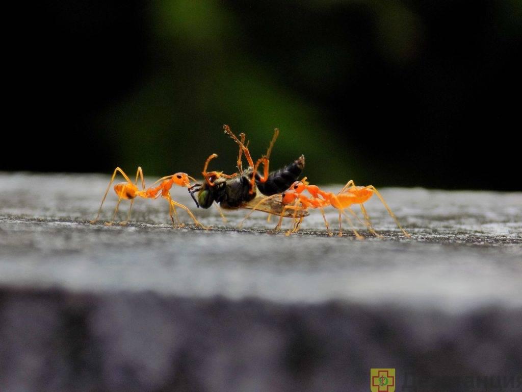 Как избавится в частном доме от муравьёв