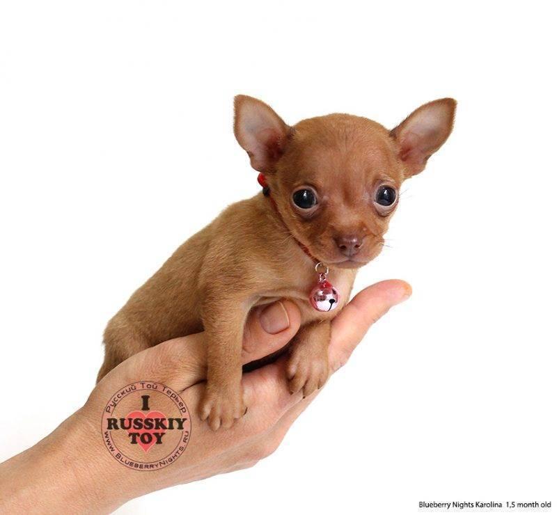 Прививка от клещей для собак достоинства и недостатки
