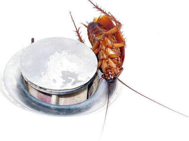 От соседей ползут тараканы, что делать. от соседей бегут тараканы: что делать, куда обращаться и жаловаться