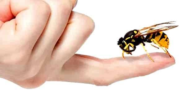 Первая помощь при укусе ребенка пчелой