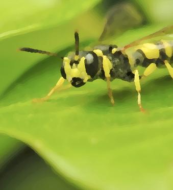Пчела укусила: что делать, как оказать первую помощь при укусе насекомого в домашних условиях?