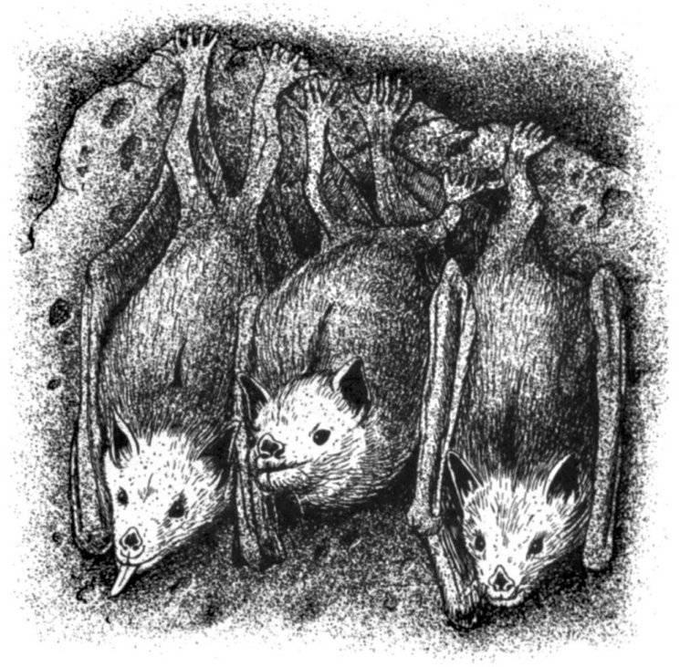 Осы-блестянки: красивые паразиты