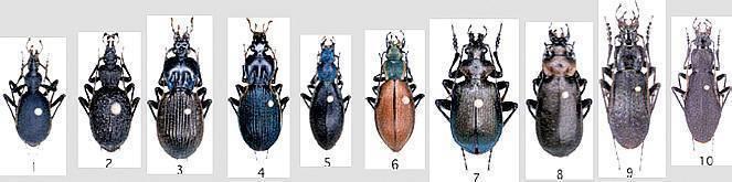 Причины появления зеленых жучков на щавеле. чем обработать растение и как предотвратить угрозу?