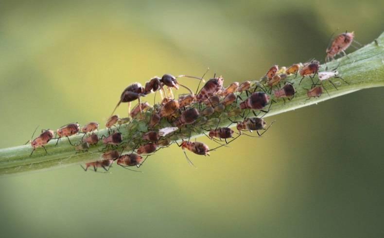 Как бороться с муравьями в квартире и огороде народными средствами и эффективными препаратами