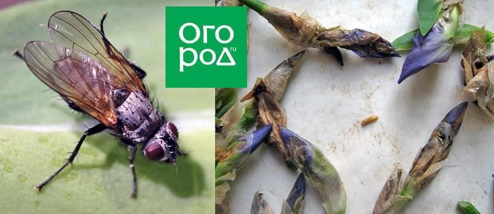 Избавляемся от мух в квартире: профилактика и народные методы