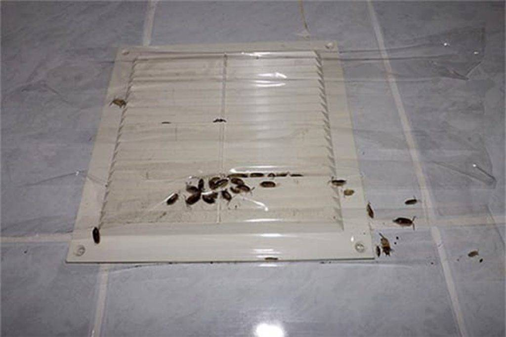 Как можно быстро и дешево вывести тараканов в домашних условиях?