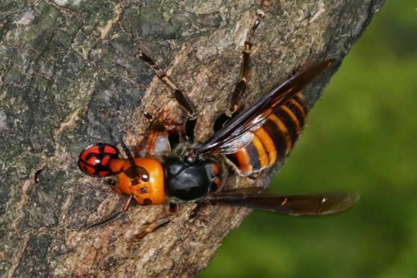 7 опасных насекомых, подстерегающих нас на даче и не только