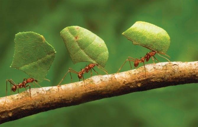 """Как избавиться от муравьев в теплице: лучшие современные и """"дедовские"""" методы"""
