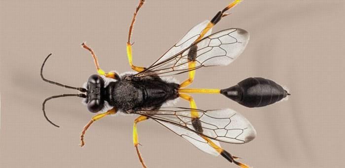 Жук майка фиолетовая— ядовитое насекомое, которое никому не угрожает