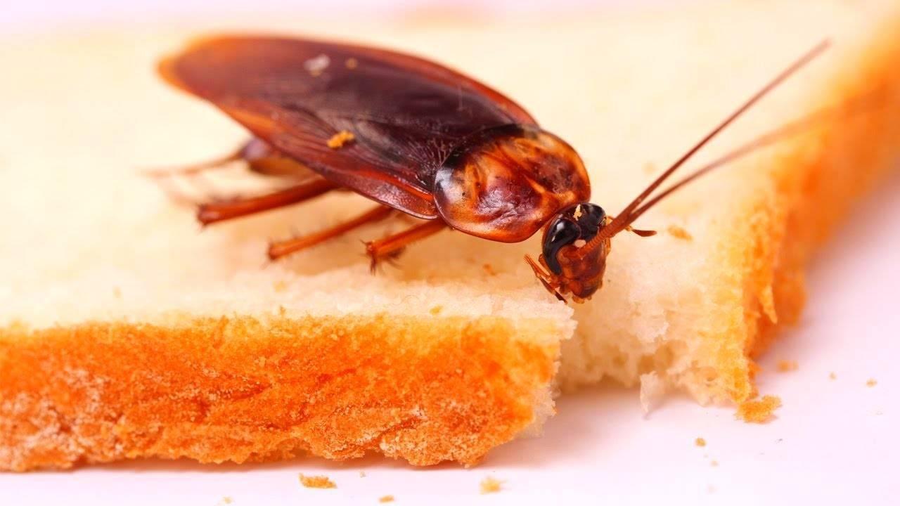 Что нужно учитывать при выборе эффективных инсектицидов от тараканов?